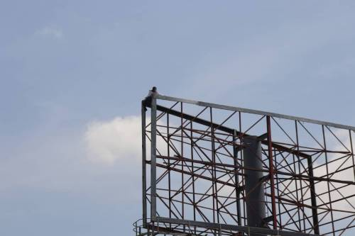 Breaking News :Adamawa Man Climbs Billboard Hanger, Vows To Jump Down Unless Buhari Resigns Within 12 Hours